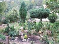 aj ine rastliny okrem sukulentov tu sú